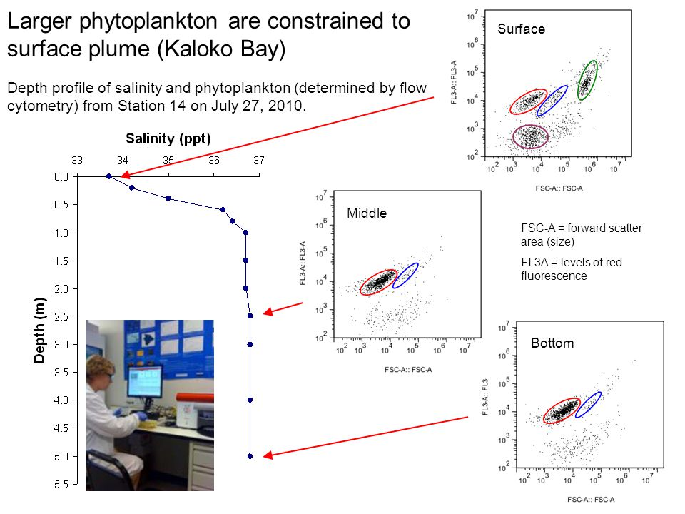 Depth profile of salinity and phytoplankton (determined by flow cytometry) from Station 14 on July 27, 2010. Surface Bottom FSC-A = forward scatter ar
