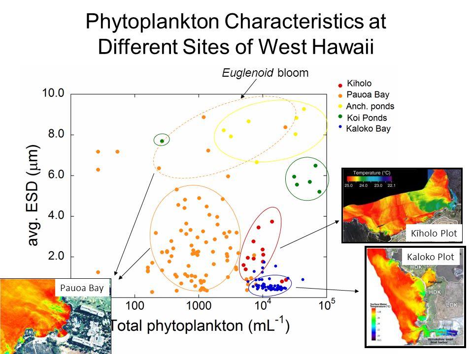 Phytoplankton Characteristics at Different Sites of West Hawaii Euglenoid bloom Kīholo Plot Kaloko Plot Pauoa Bay