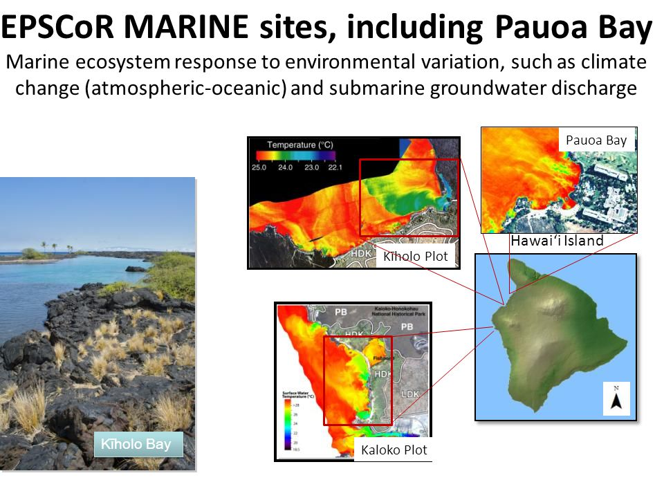 EPSCoR MARINE sites, including Pauoa Bay Marine ecosystem response to environmental variation, such as climate change (atmospheric-oceanic) and submar
