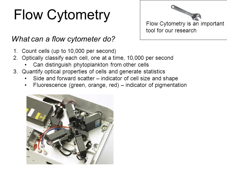 Flow Cytometry What can a flow cytometer do? 1.Count cells (up to 10,000 per second) 2.Optically classify each cell, one at a time, 10,000 per second
