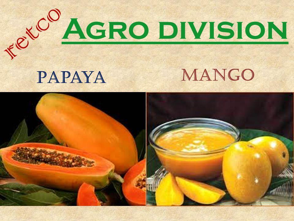 retco Agro division Papaya mango
