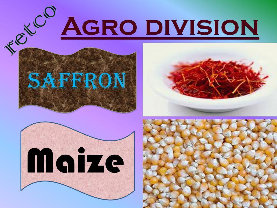 Agro division retco Saffron Maize