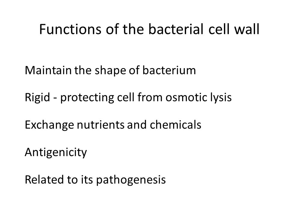 Rigid - protecting cell from osmotic lysis Exchange nutrients and chemicals Antigenicity Related to its pathogenesis Maintain the shape of bacterium Functions of the bacterial cell wall