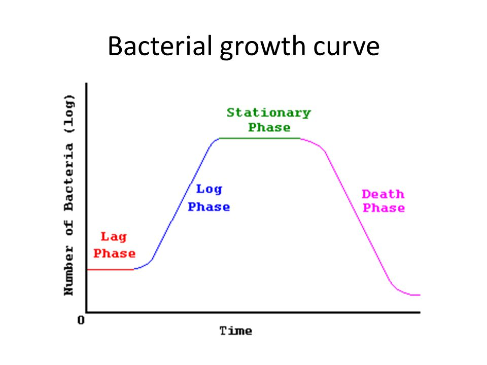 Bacterial growth curve