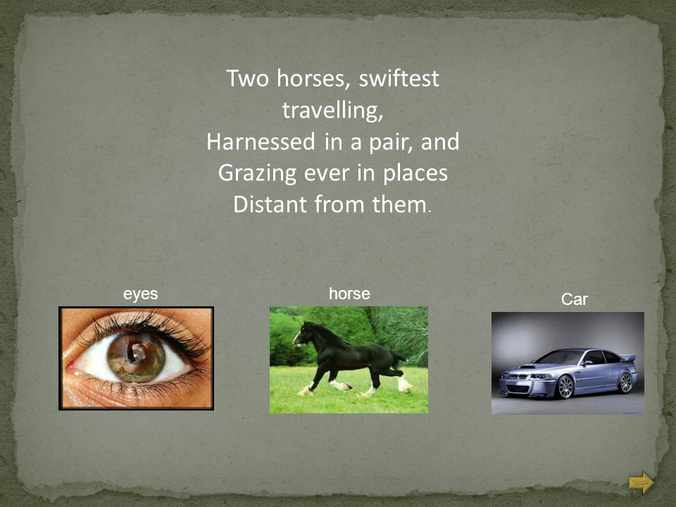 Two horses, swiftest travelling, Harnessed in a pair, and Grazing ever in places Distant from them. Car horseeyes