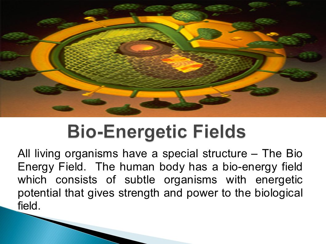 All living organisms have a special structure – The Bio Energy Field.