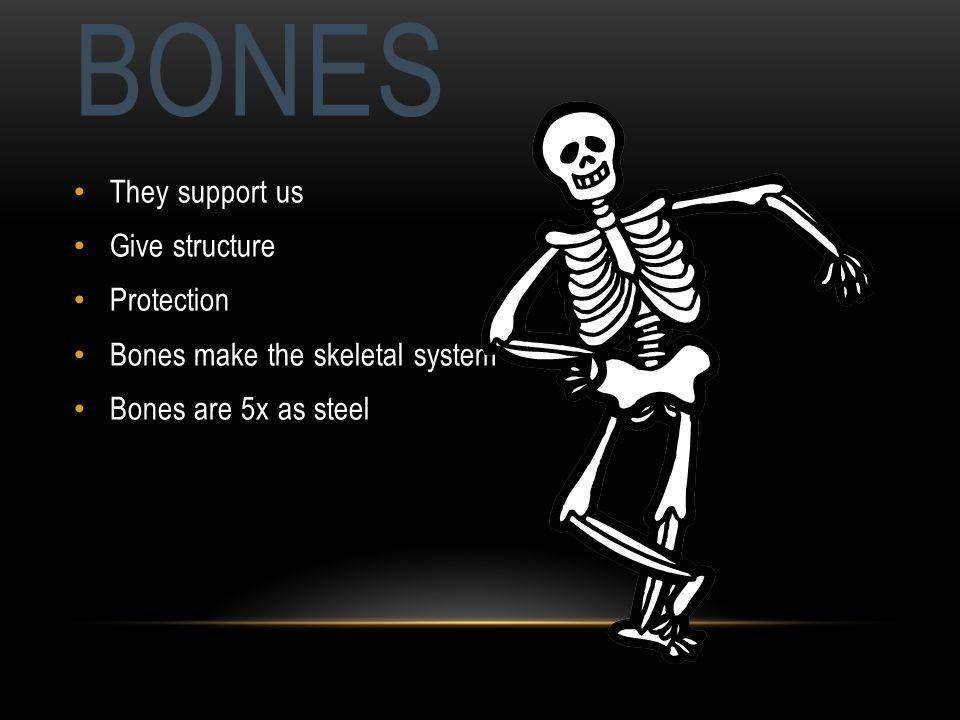 BONES They support us Give structure Protection Bones make the skeletal system Bones are 5x as steel