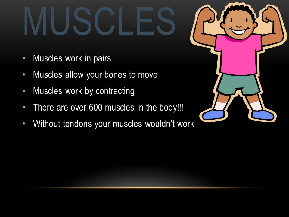 MUSCLES Muscles work in pairs Muscles allow your bones to move Muscles work by contracting There are over 600 muscles in the body!!.