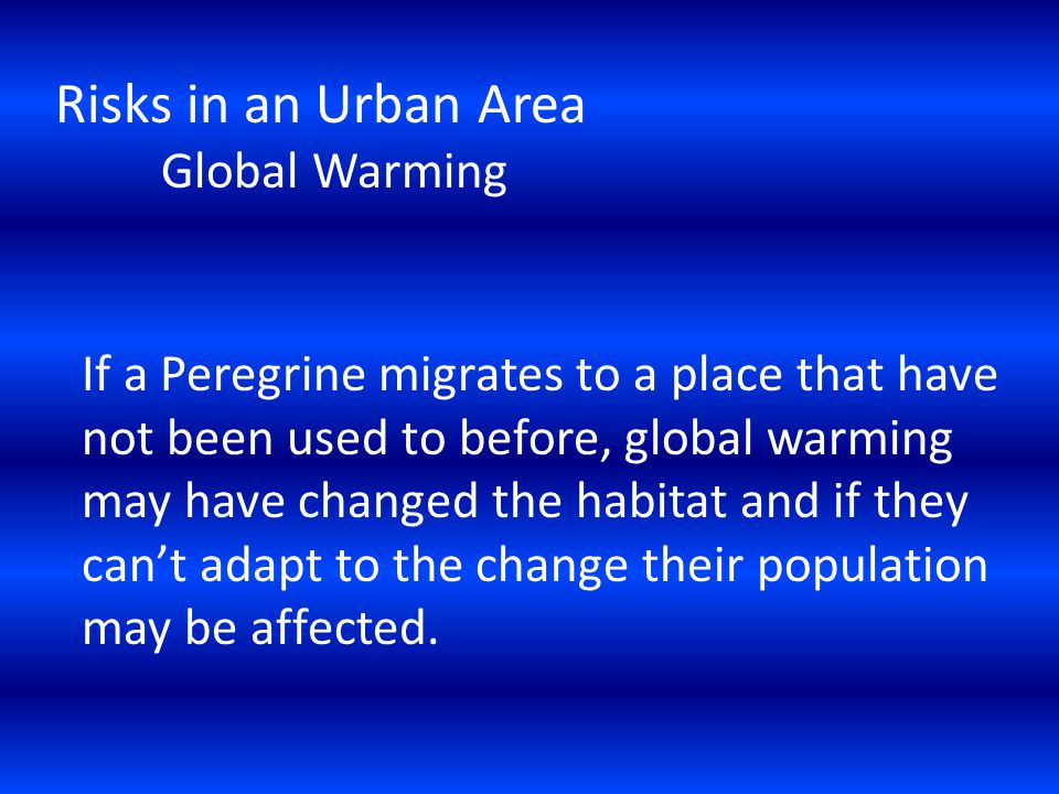 Risks in an Urban Area Global Warming If a Peregrine migrates to a place that have not been used to before, global warming may have changed the habitat and if they cant adapt to the change their population may be affected.