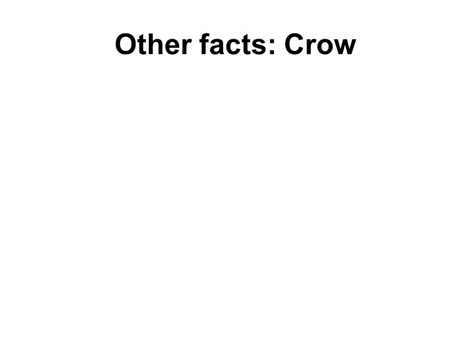 Other facts: Crow