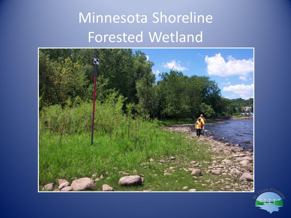 Minnesota Shoreline Forested Wetland