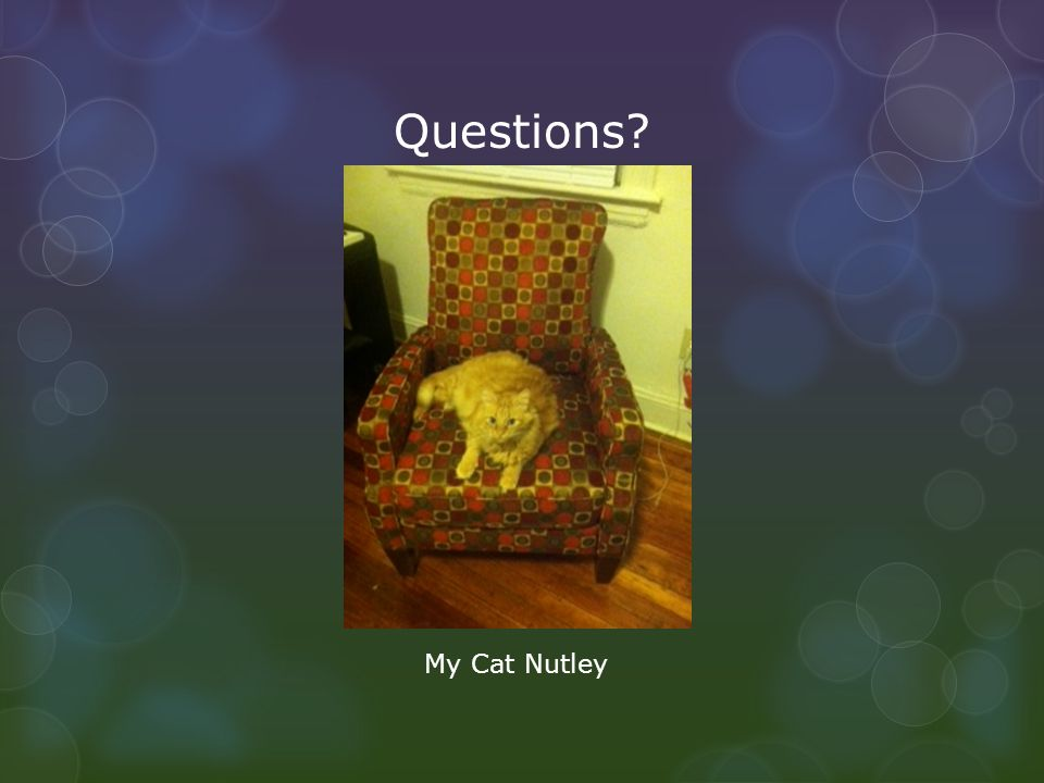 Questions? My Cat Nutley