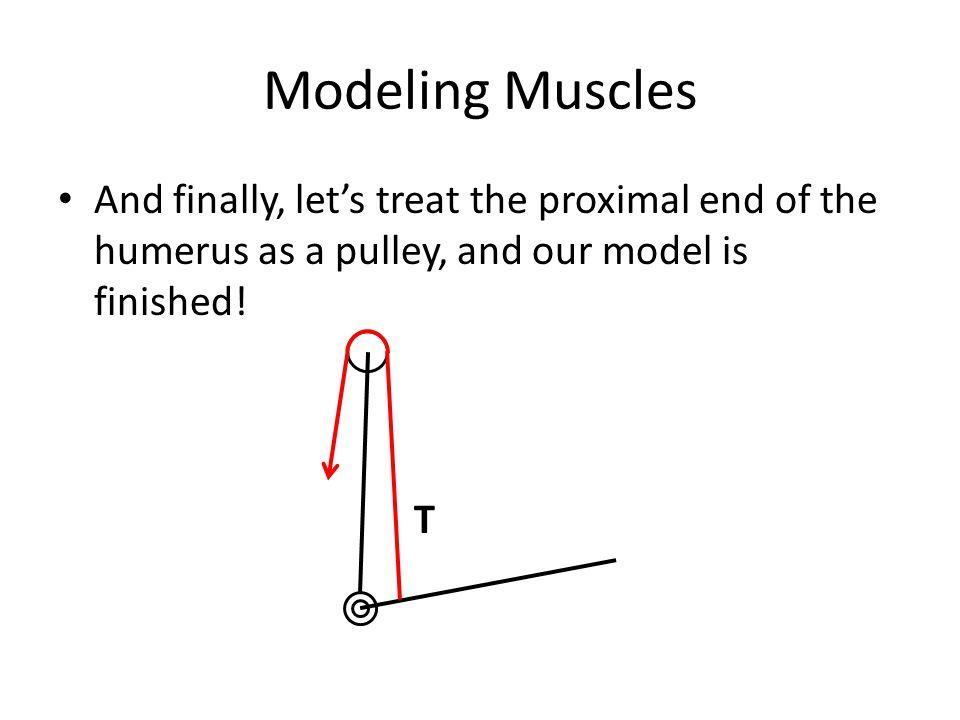 Modeling Muscles And finally, lets treat the proximal end of the humerus as a pulley, and our model is finished! T