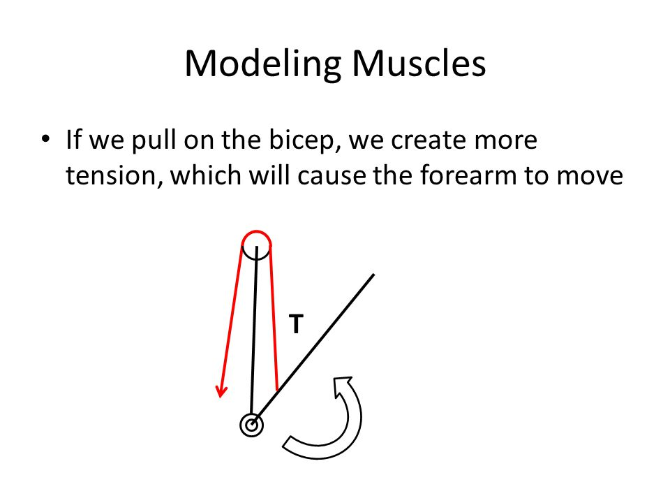Modeling Muscles If we pull on the bicep, we create more tension, which will cause the forearm to move T