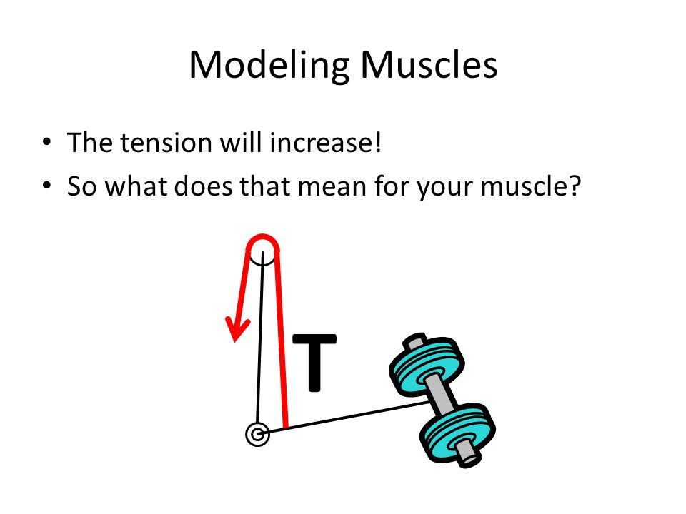 Modeling Muscles The tension will increase! So what does that mean for your muscle? T