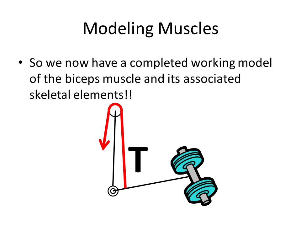 Modeling Muscles So we now have a completed working model of the biceps muscle and its associated skeletal elements!! T