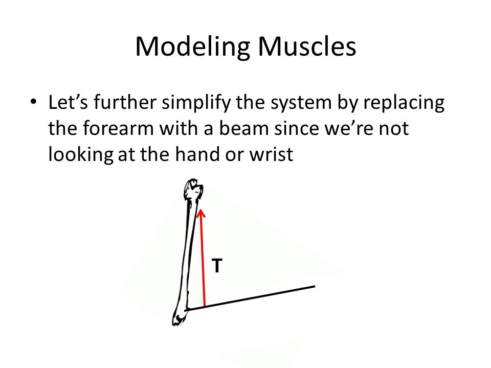 Modeling Muscles Lets further simplify the system by replacing the forearm with a beam since were not looking at the hand or wrist T