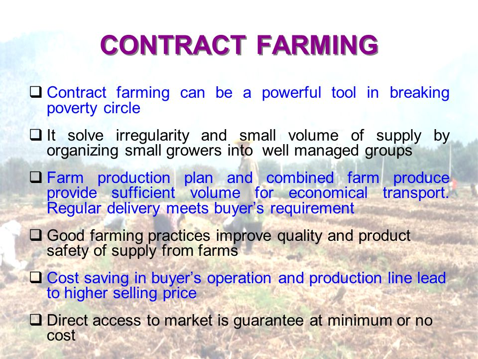 CONTRACT FARMING Contract farming can be a powerful tool in breaking poverty circle It solve irregularity and small volume of supply by organizing small growers into well managed groups Farm production plan and combined farm produce provide sufficient volume for economical transport.