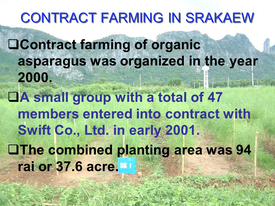 CONTRACT FARMING IN SRAKAEW Contract farming of organic asparagus was organized in the year 2000.