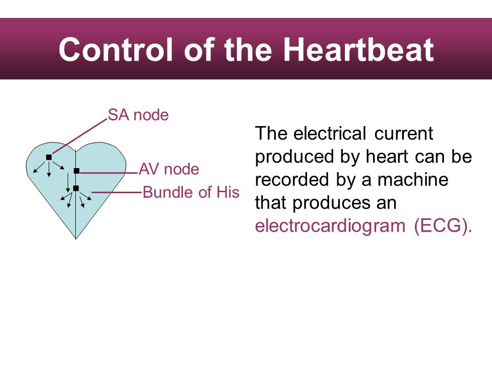... SA node AV node Bundle of His The electrical current produced by heart can be recorded by a machine that produces an electrocardiogram (ECG).