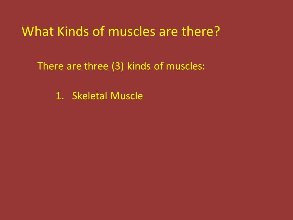 What Kinds of muscles are there There are three (3) kinds of muscles: 1.Skeletal Muscle
