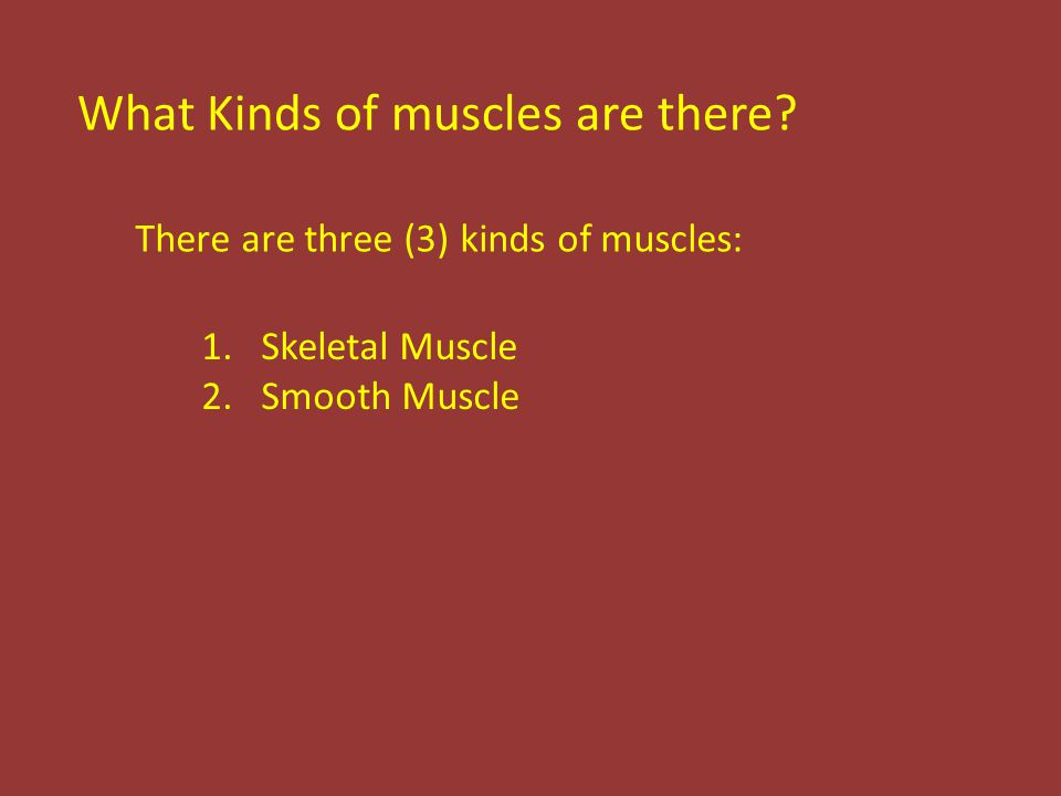 What Kinds of muscles are there.
