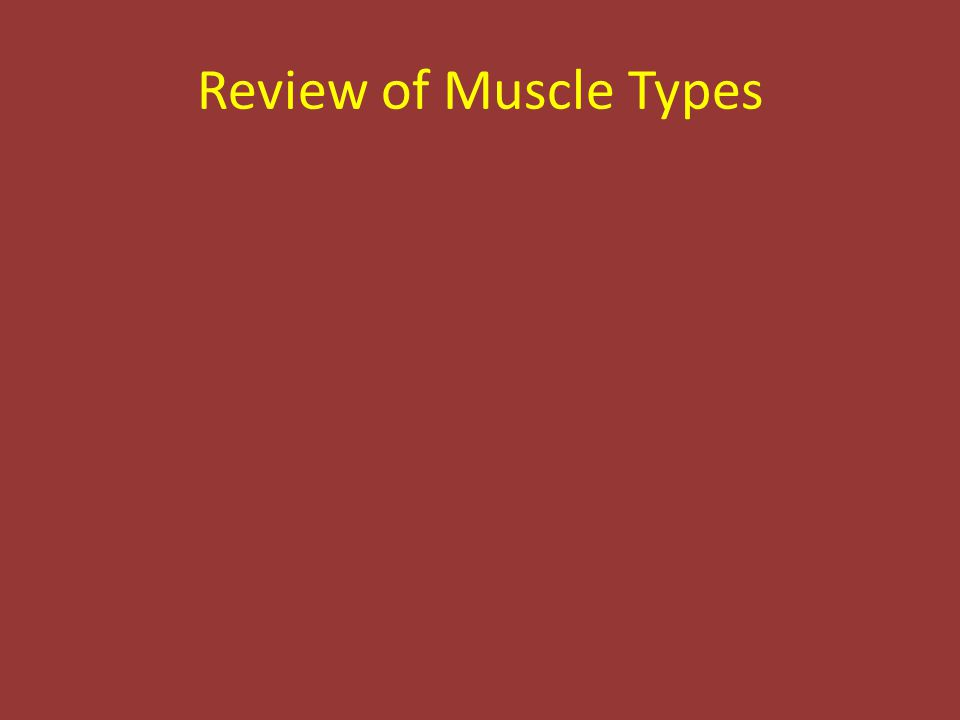Review of Muscle Types