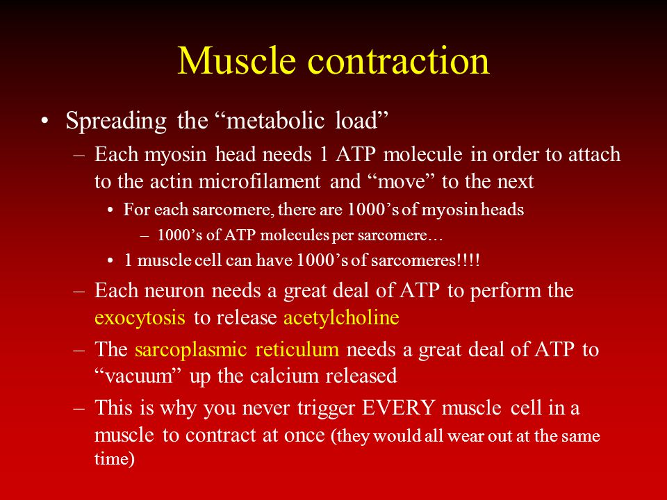 Muscle contraction Spreading the metabolic load –Each myosin head needs 1 ATP molecule in order to attach to the actin microfilament and move to the n