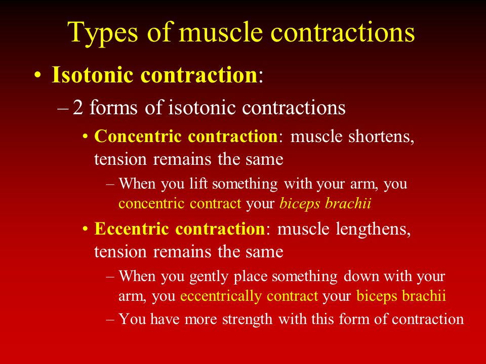 Types of muscle contractions Isotonic contraction: –2 forms of isotonic contractions Concentric contraction: muscle shortens, tension remains the same