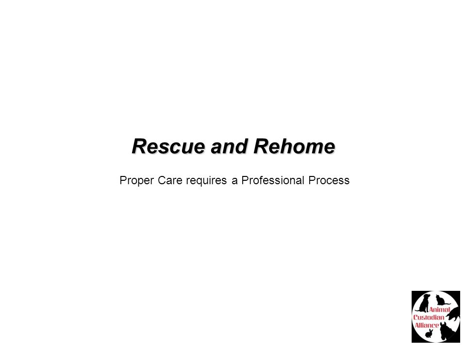 Rescue and Rehome Proper Care requires a Professional Process