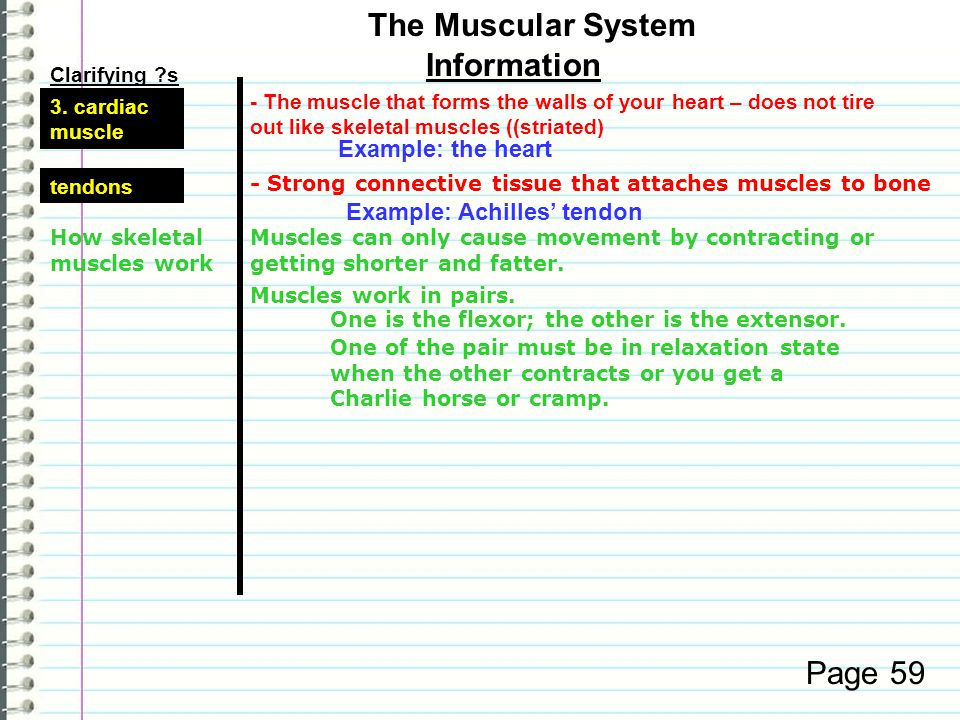 Clarifying ?s Information Page 58 Muscle action -muscles that we cannot consciously control They move on their own. - muscles that we can consciously