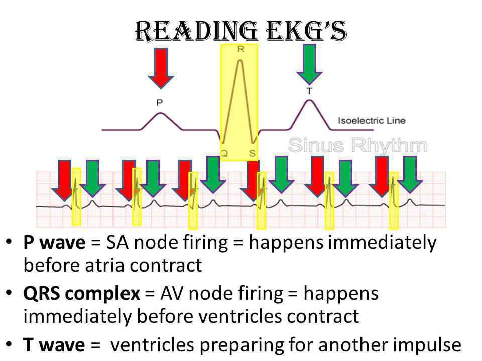 Reading EKGs P wave = SA node firing = happens immediately before atria contract QRS complex = AV node firing = happens immediately before ventricles