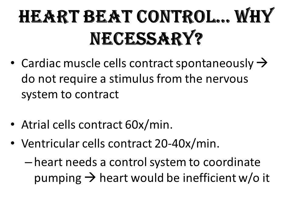 Heart Beat Control… Why Necessary? Cardiac muscle cells contract spontaneously do not require a stimulus from the nervous system to contract Atrial ce