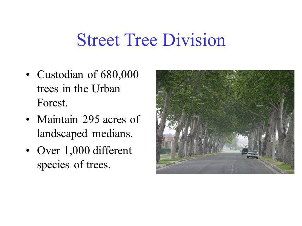 Street Tree Division Custodian of 680,000 trees in the Urban Forest.
