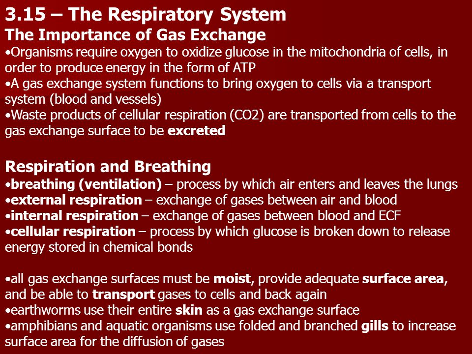 3.15 – The Respiratory System The Importance of Gas Exchange Organisms require oxygen to oxidize glucose in the mitochondria of cells, in order to produce energy in the form of ATP A gas exchange system functions to bring oxygen to cells via a transport system (blood and vessels) Waste products of cellular respiration (CO2) are transported from cells to the gas exchange surface to be excreted Respiration and Breathing breathing (ventilation) – process by which air enters and leaves the lungs external respiration – exchange of gases between air and blood internal respiration – exchange of gases between blood and ECF cellular respiration – process by which glucose is broken down to release energy stored in chemical bonds all gas exchange surfaces must be moist, provide adequate surface area, and be able to transport gases to cells and back again earthworms use their entire skin as a gas exchange surface amphibians and aquatic organisms use folded and branched gills to increase surface area for the diffusion of gases