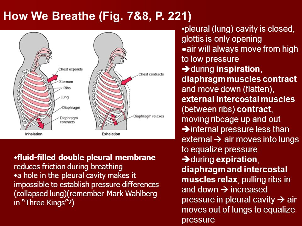 How We Breathe (Fig.7&8, P.