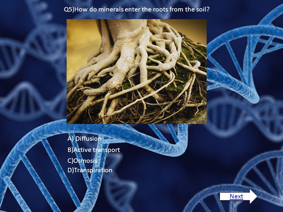 Q5)How do minerals enter the roots from the soil? A) Diffusion B)Active transport C)Osmosis D)Transpiration Next