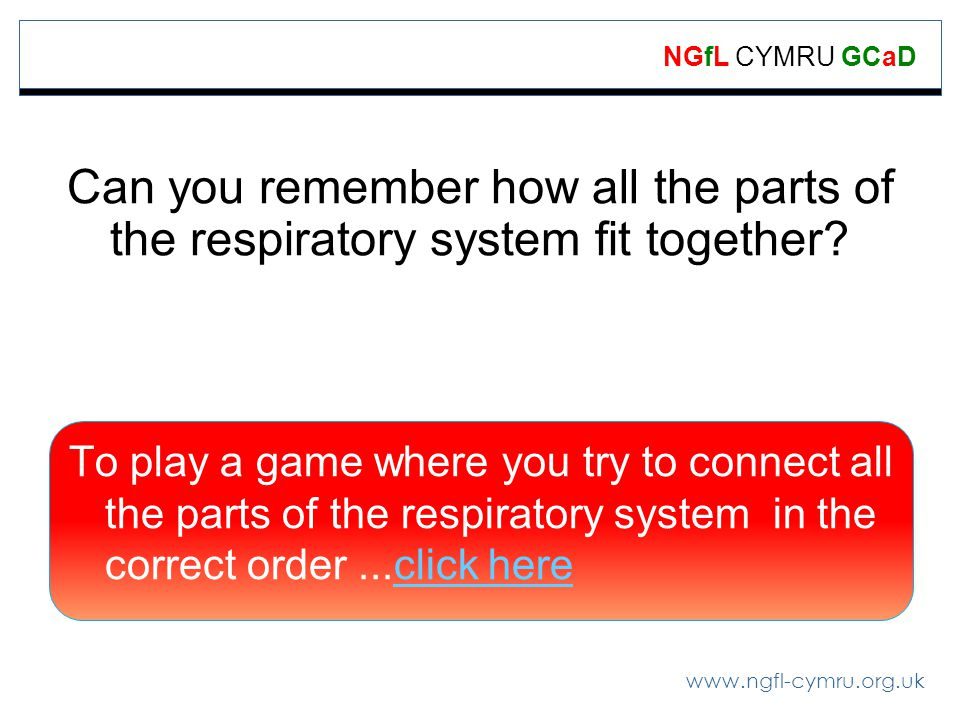 www.ngfl-cymru.org.uk NGfL CYMRU GCaD Can you remember how all the parts of the respiratory system fit together.