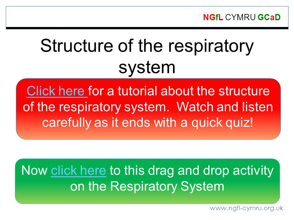 www.ngfl-cymru.org.uk NGfL CYMRU GCaD Structure of the respiratory system Click here Click here for a tutorial about the structure of the respiratory system.
