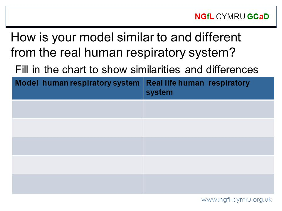 www.ngfl-cymru.org.uk NGfL CYMRU GCaD How is your model similar to and different from the real human respiratory system.