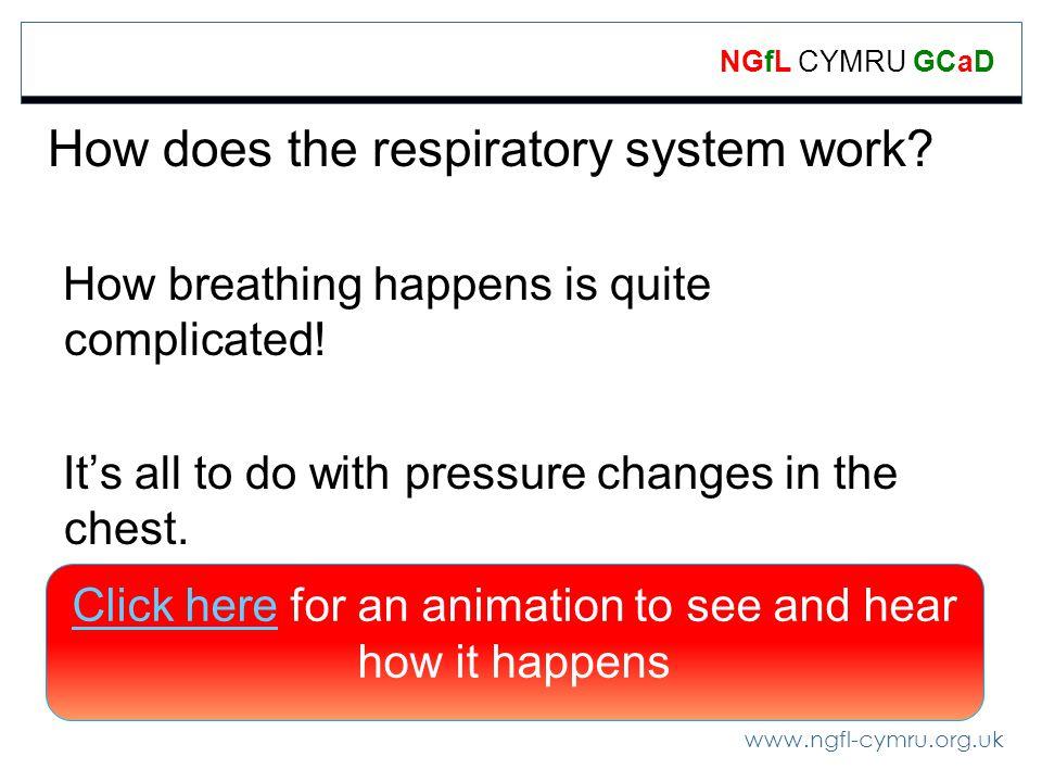 www.ngfl-cymru.org.uk NGfL CYMRU GCaD How does the respiratory system work.