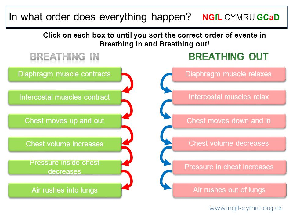 www.ngfl-cymru.org.uk NGfL CYMRU GCaD In what order does everything happen? Click on each box to until you sort the correct order of events in Breathi