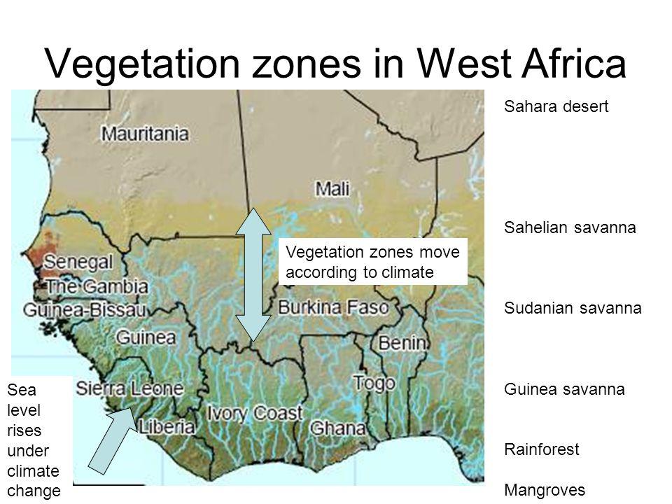 Vegetation zones in West Africa Sahara desert Sahelian savanna Sudanian savanna Guinea savanna Rainforest Mangroves Vegetation zones move according to climate Sea level rises under climate change