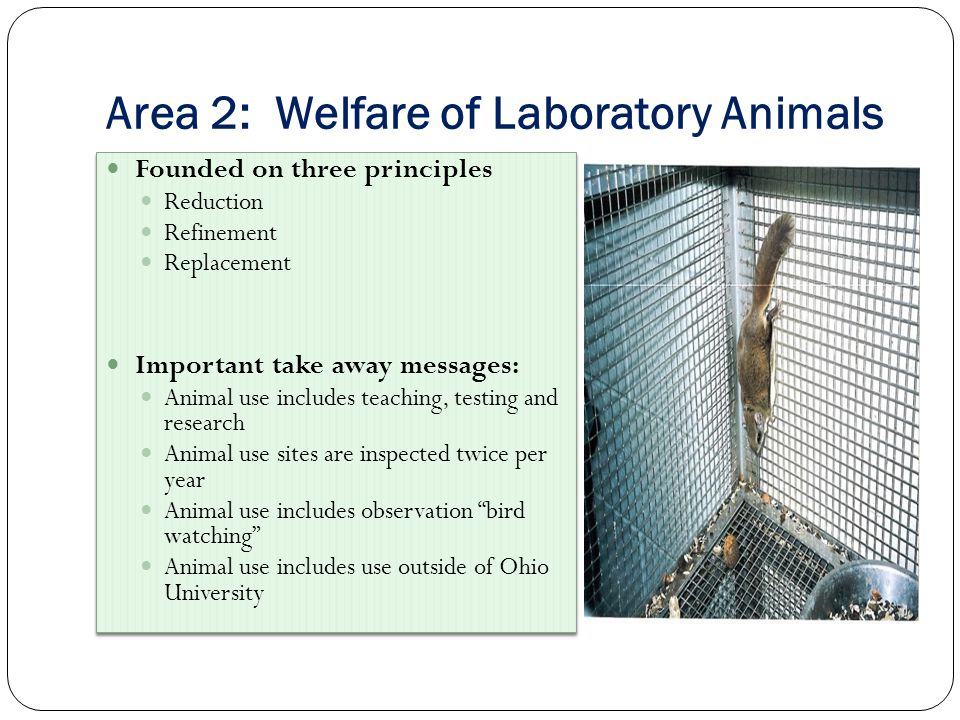Area 2: Welfare of Laboratory Animals Founded on three principles Reduction Refinement Replacement Important take away messages: Animal use includes teaching, testing and research Animal use sites are inspected twice per year Animal use includes observation bird watching Animal use includes use outside of Ohio University Founded on three principles Reduction Refinement Replacement Important take away messages: Animal use includes teaching, testing and research Animal use sites are inspected twice per year Animal use includes observation bird watching Animal use includes use outside of Ohio University