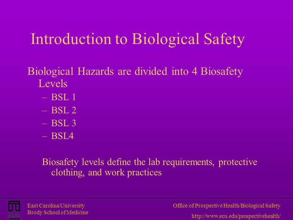 East Carolina University Brody School of Medicine Office of Prospective Health/Biological Safety http://www.ecu.edu/prospectivehealth/ Introduction to