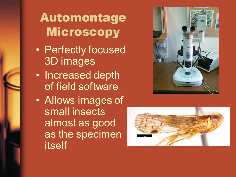 Automontage Microscopy Perfectly focused 3D images Increased depth of field software Allows images of small insects almost as good as the specimen itself