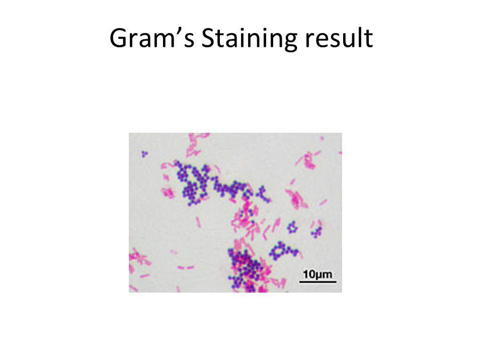 Grams Staining result