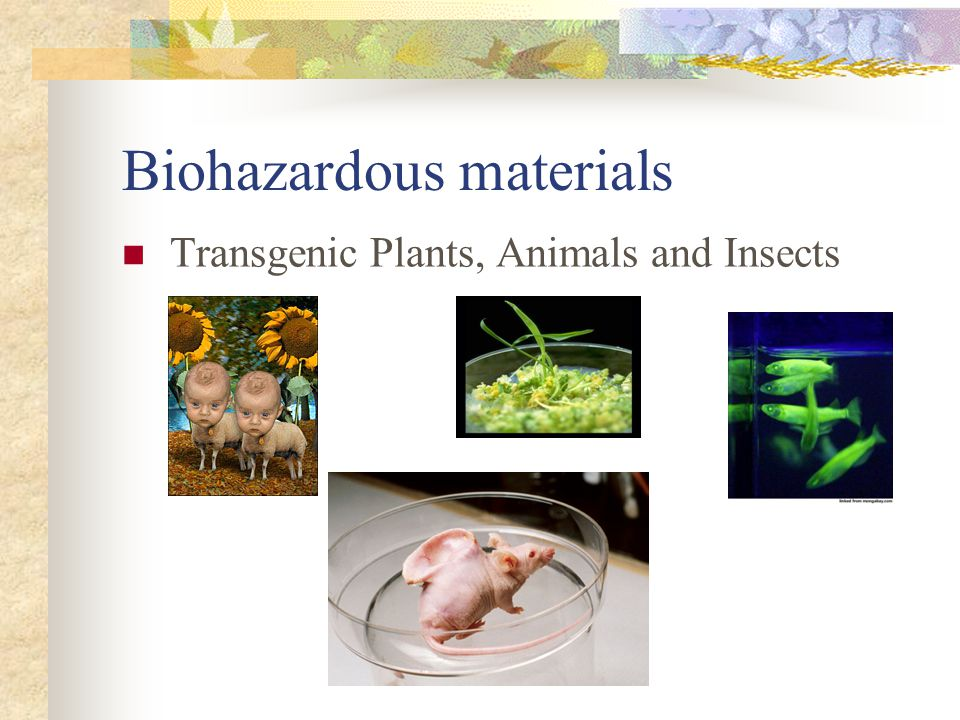 Biohazardous materials Transgenic Plants, Animals and Insects