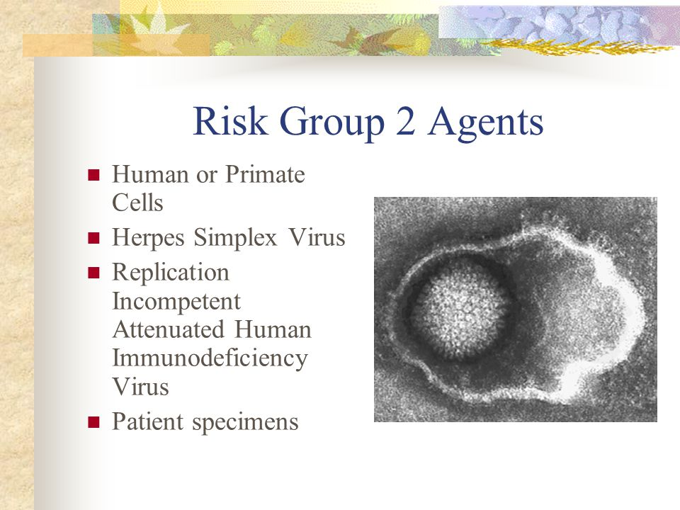 Risk Group 2 Agents Human or Primate Cells Herpes Simplex Virus Replication Incompetent Attenuated Human Immunodeficiency Virus Patient specimens