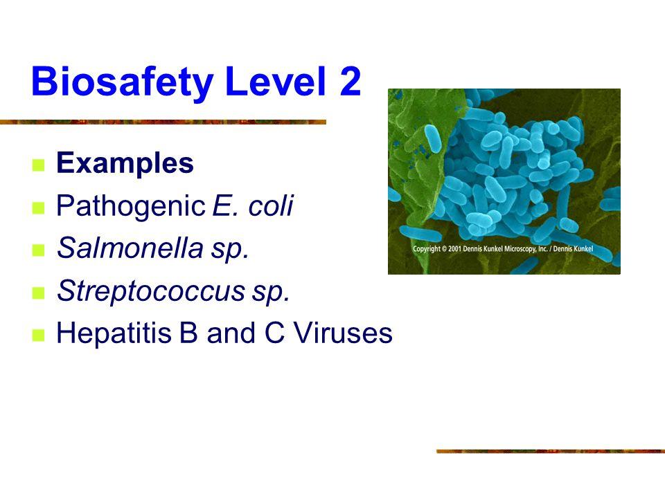 Biosafety Level 2 Examples Pathogenic E. coli Salmonella sp. Streptococcus sp. Hepatitis B and C Viruses